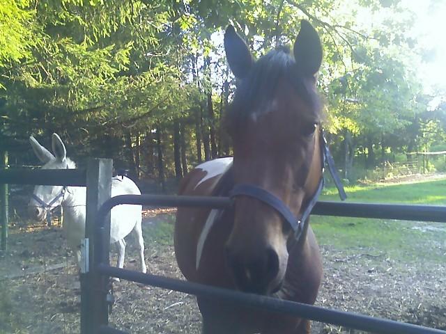 nice horsie
