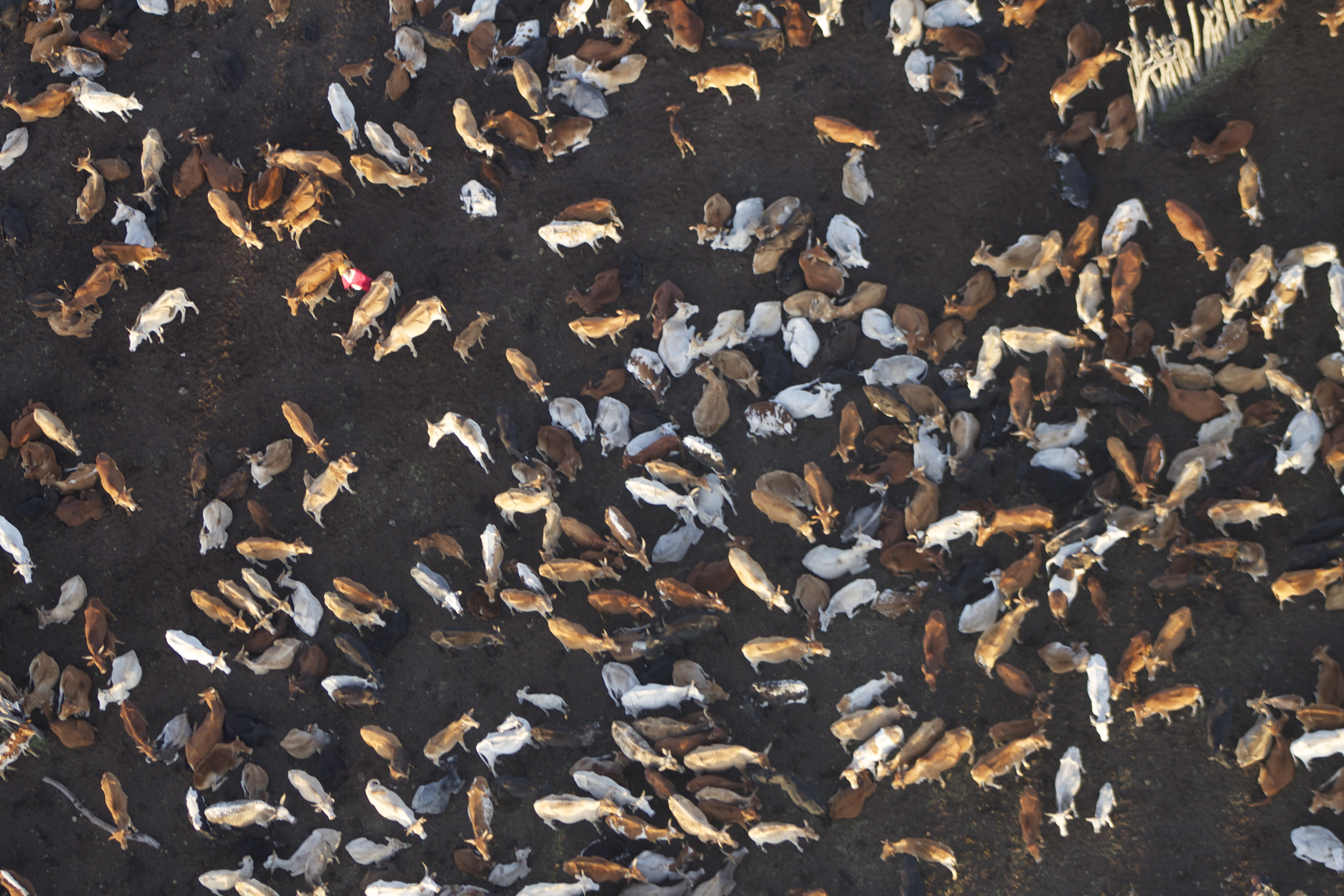 Manyatta overhead