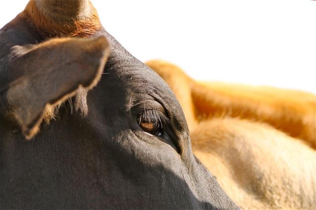 Mara Beef
