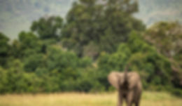 masai mara plus samburu-33.jpg
