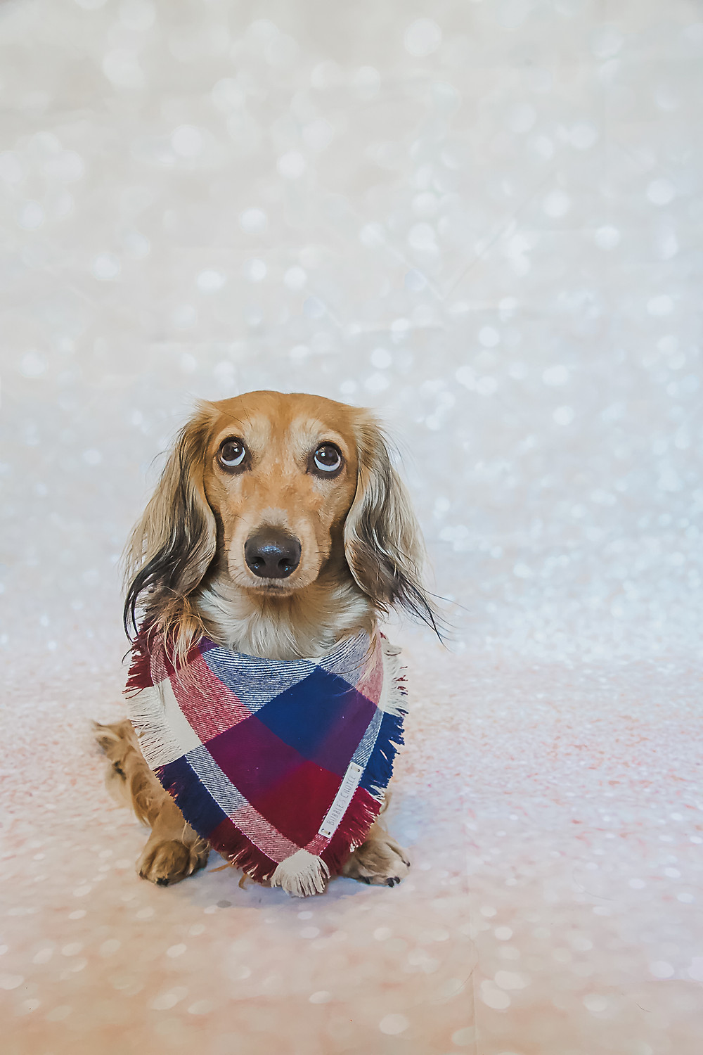 Photograph using the rule of thirds | Tips for photographing dogs
