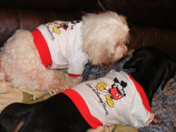 Dogs dressed in Disney Tees