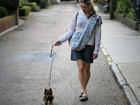 Let's Fly! A Vacation Packing Checklist for Your Pup