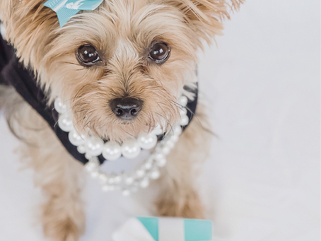 DIY Dog Halloween Costumes Using Materials You Already Own