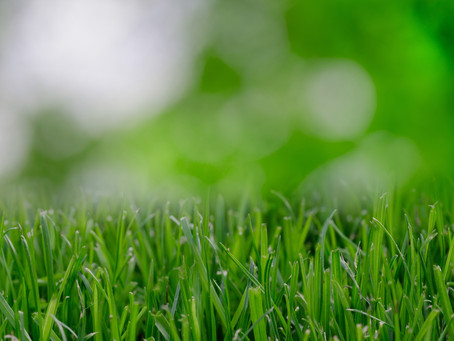 4 Tips for Mowing a Healthy Lawn All Summer Long