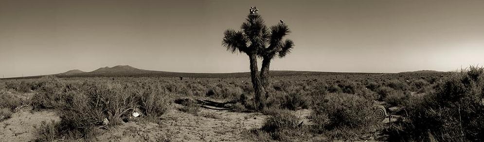 Joshua Tree, Mojave California