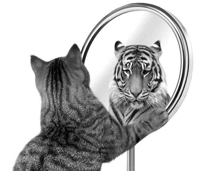 Chaton cognac sous hypnose qui se reflète comme un tigre
