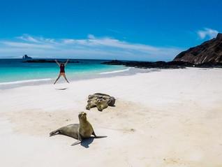 Lesh-Jumping-Sea-Lion-San-Cristobal-Gala