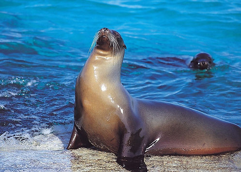 4D/3N Galápagos - Isla Santa Cruz + Parte Alta