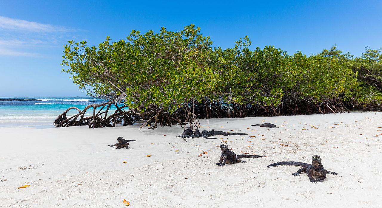 Thumbnail: 4D/3N Galápagos - Isla Santa Cruz + Parte Alta