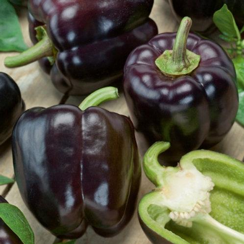 Purple Pepper Royal Mavras