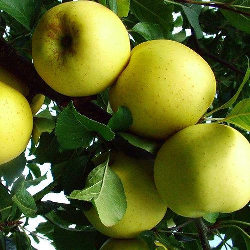 Apple Greensleeves