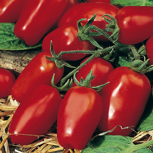 Tomato  - Tropical Ruby