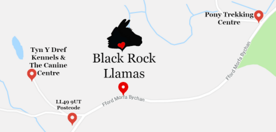 How To Find Black Rock Llamas