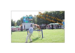 1st UK Llama Display Team