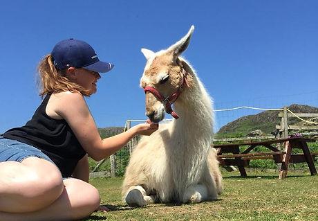 Llama Love
