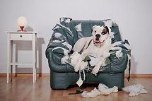 imagedogsdog-chair-surrounded-stuffingbl