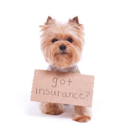 need-pet-insurance-3.jpg