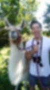 llama14.jpg