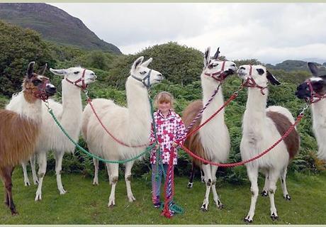 Birthday Parties with Llamas
