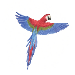 Macawwebsite2.png