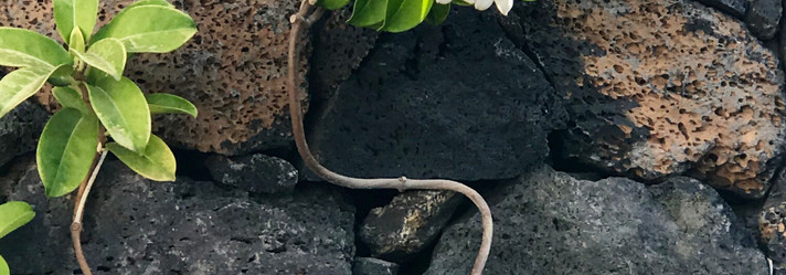 Nature finds its way