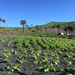 Springtime in northern Lanzarote