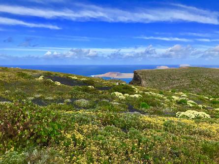 Green Lanzarote