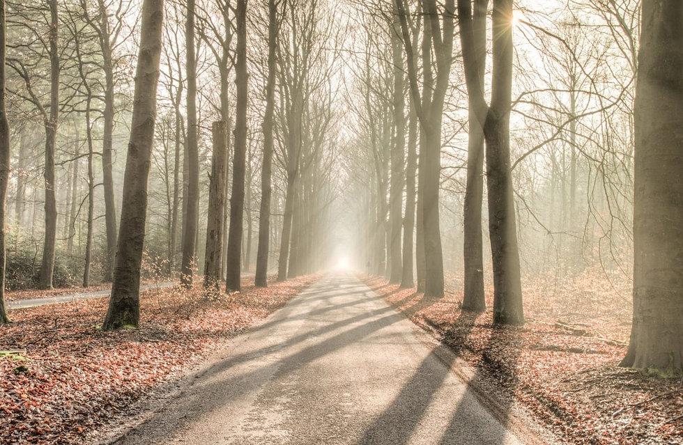 sun mist forest.jpg