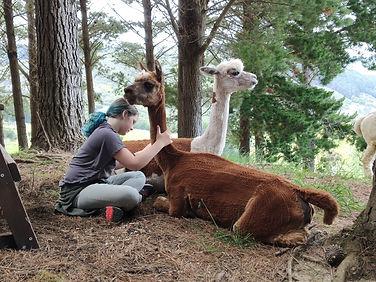Alpaca farm visit 4.jpg