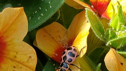 The Ladybugs are here!
