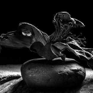 Shailan Parker: Light at the Centre