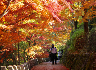 Nara's 10 Top Autumn Foliage Spots