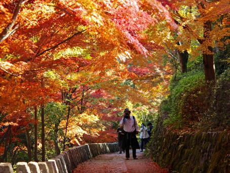 Nara's 10 Top Autumn Foliage Spots