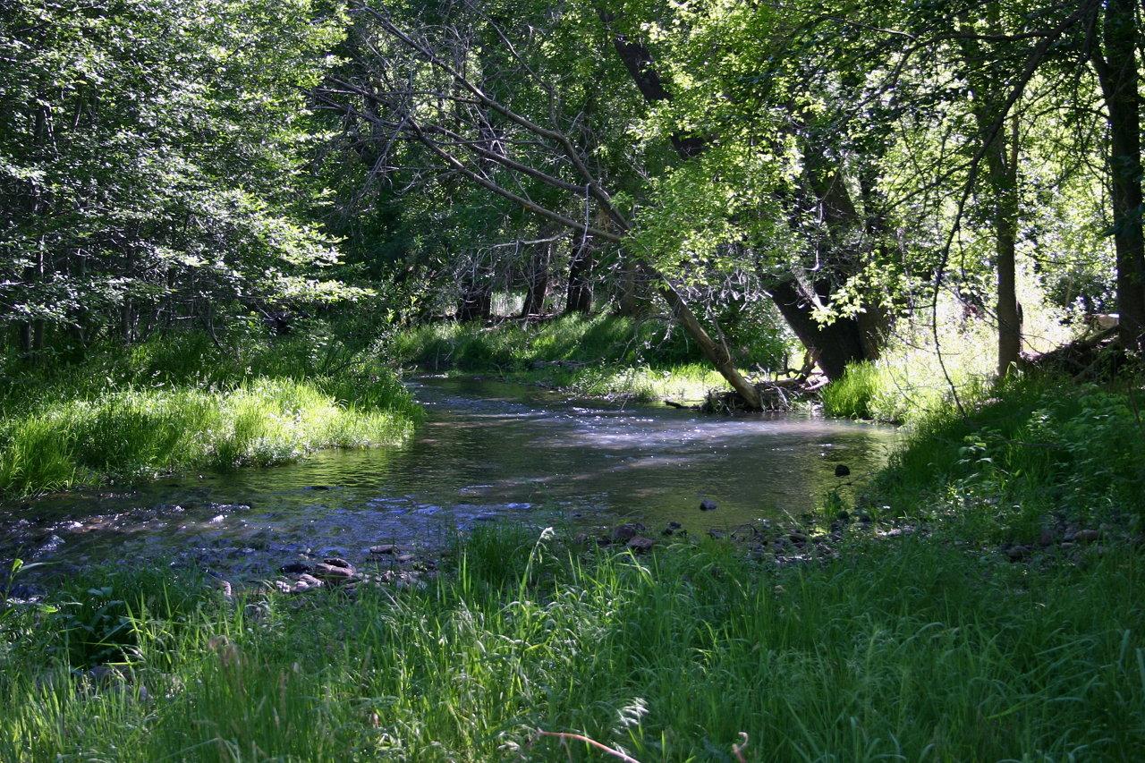Mimbres River