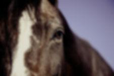 horse-594191_1920.jpg