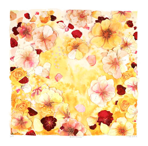Bloomshine, red and yellow roses, sunshine, petals, love, interior decor ideas