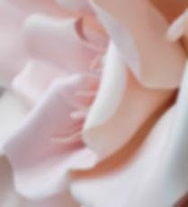 Rosa Fiore 3D