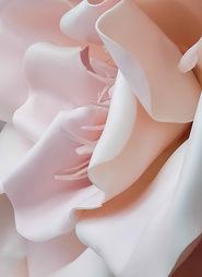 3D-rosa Blume