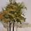 Thumbnail: Árvore no Outono II