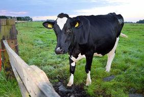 dairy_days.jpg