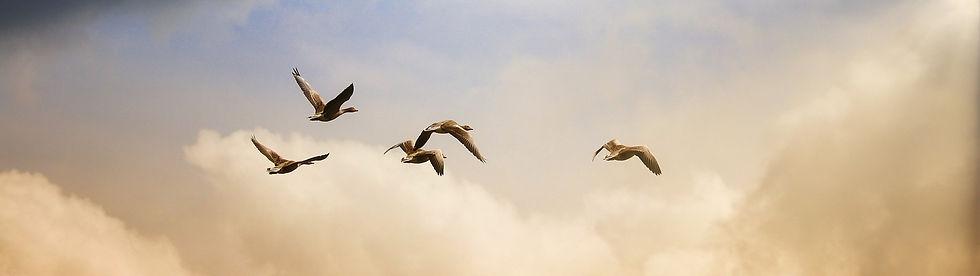 birds-5159711_1920_edited.jpg