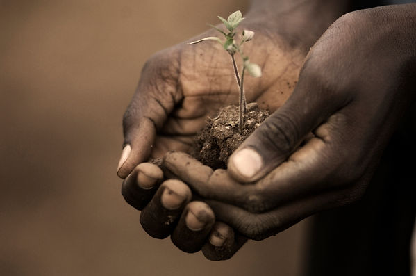 plant-in-hands-image-haiti.jpg