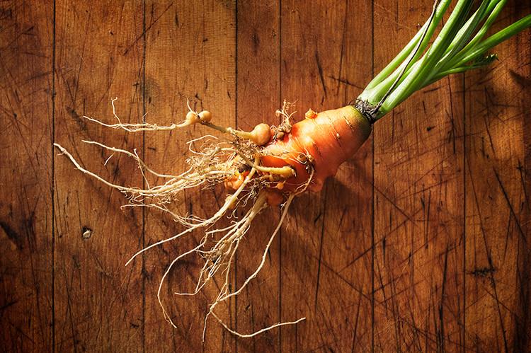202000818_Carrot_01.jpg