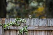 20210103_0003_Birds_backyard_Birds_backy