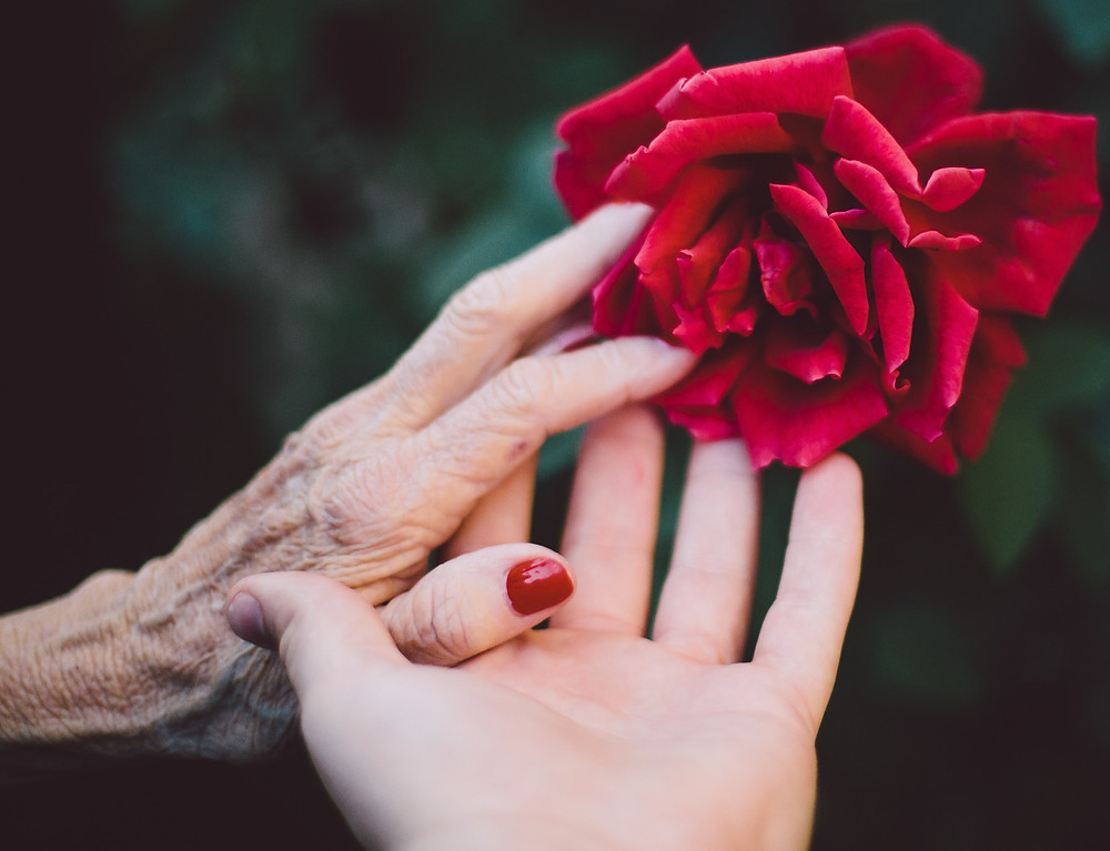 Elderly woman's and younger person's hands touching arose together, by Jake Thacker