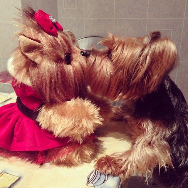 Real dog kissing stuffed animal dog