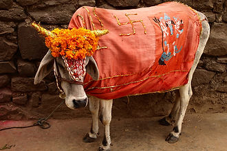Pongal festival India tours and travel packages
