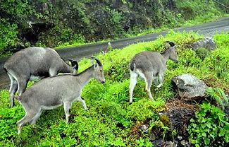 Munnar trekking tours