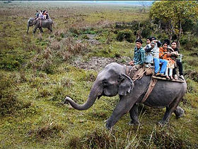 Elephant Safari in Kaziranga National Park